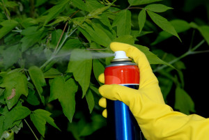 Picture of hand holding spray and spraying leafs of tree.
