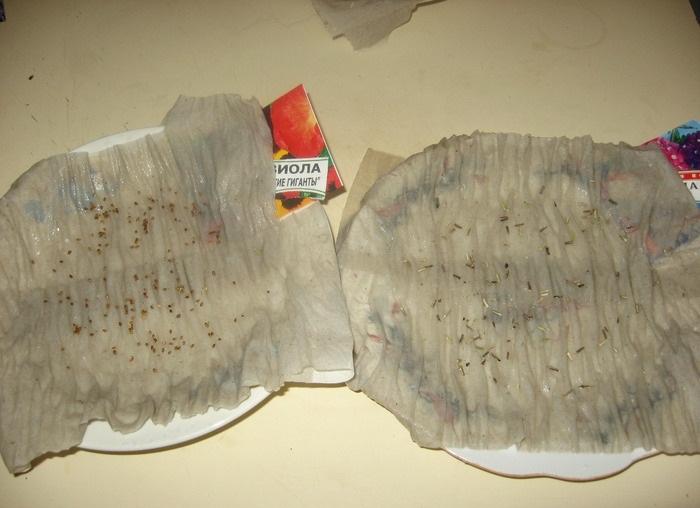 Петуния посадка на туалетную бумагу