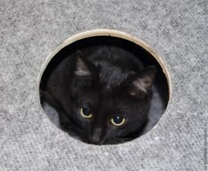 кошка16